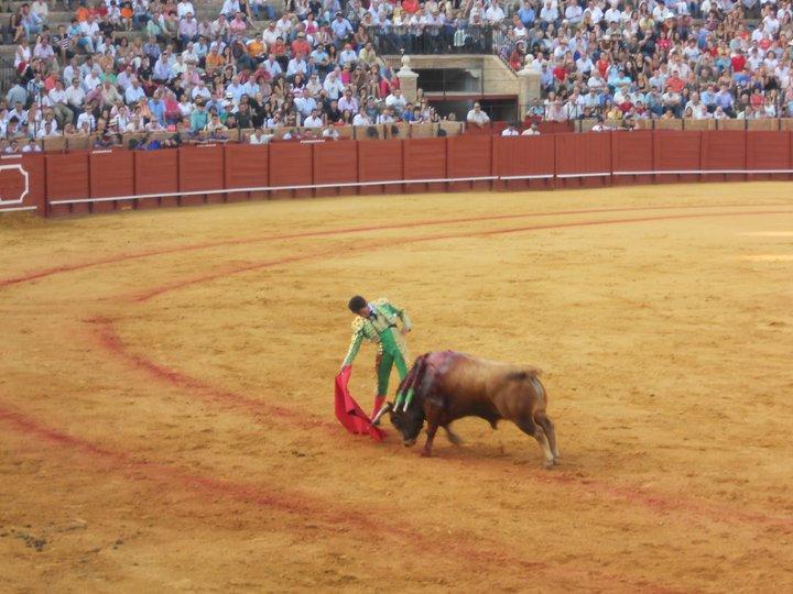 bull fight sevilla 1